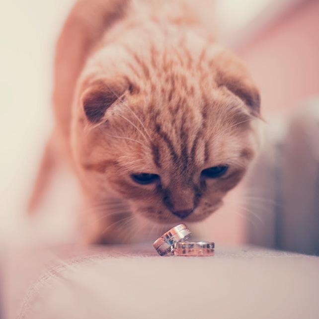 Фото котов свадьба