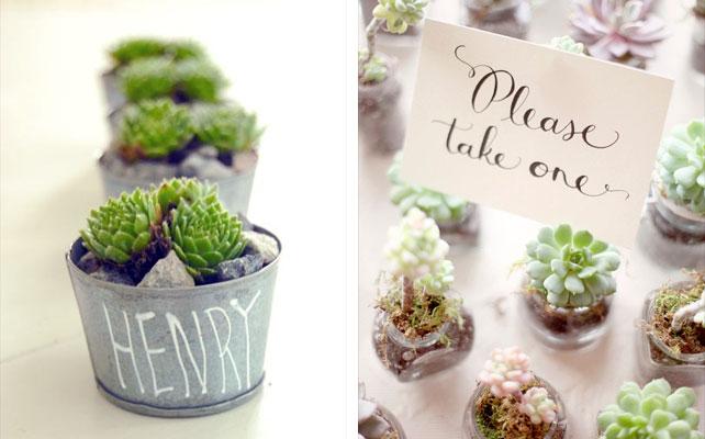 подарки для гостей на свадбе, растение в горшочке